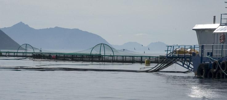 Vattenbrukets expansion sker i kommersiella odlingar som riktar sig till alltmer köpstarka kunder. Foto: Lars Krögerström