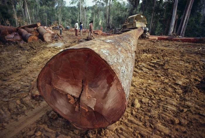 En effekt av minskad jordtillgång är skogsskövling. Av den uppodling som skedde globalt åren 1980–2000 gjordes 83 procent på tidigare skogsmark. Foto: iStockphoto.com / MsLightBox.