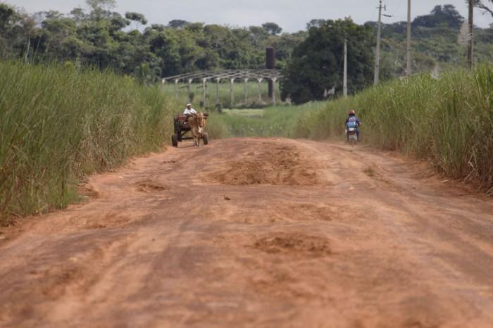 Dominioeffekt. Brasilien har producerat etanol från sockerrör sedan 1970-talet och på senare år har odlingsarealen ökat kraftigt. Industrin förnekar dock att produktionen skulle hota regnskogen. Foto: Nicolas Desagher / Azote