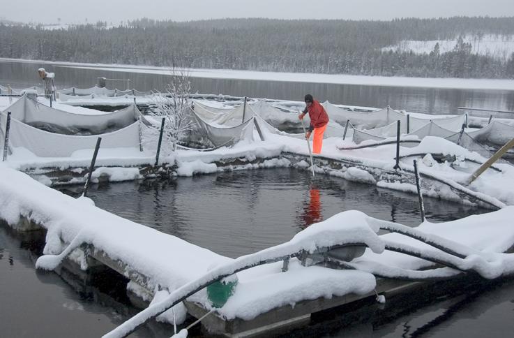"""Från att ha varit """"ett miljöproblem"""" betraktas vattenbruket nu mer och mer som en utvecklingsbar näring. Men trots att näringen kommit tillrätta med sina miljöproblem finns fortfarande fördomar kvar att bekämpa, säger Hans Ackefors. Foto: Lars Krögerström"""