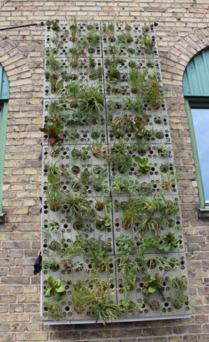 I det andra systemet kläs stenullsskivor med en filtduk. Växterna sätts in i hål som borrats i skivorna. Växterna får vatten genom att både skivan och filtduken vattnas. Foto: Annika Wuolo
