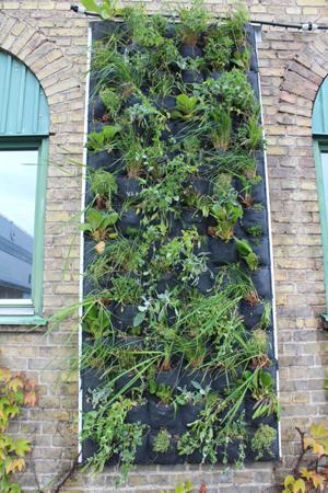 Växterna sätts i fickor fyllda med ett odlingssubstrat, innehållande bland annat kompost och pimpsten. Bakom fickorna finns ett filtmaterial som leder vatten till växterna. Foto: Annika Wuolo