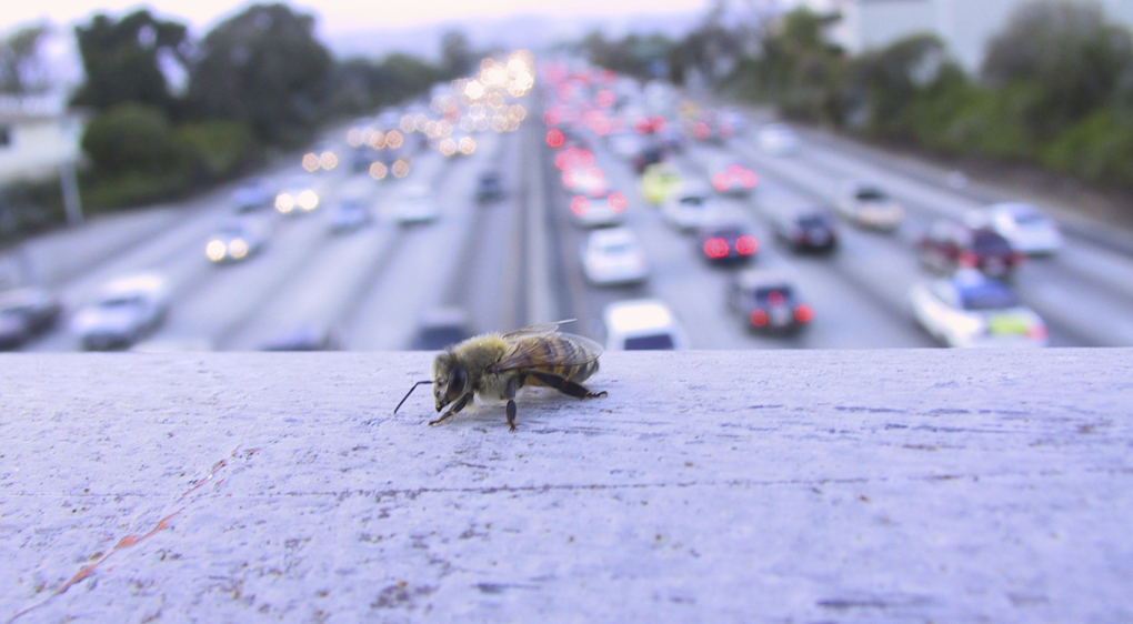 Ett bi vilar på ett räcke över motorvägen