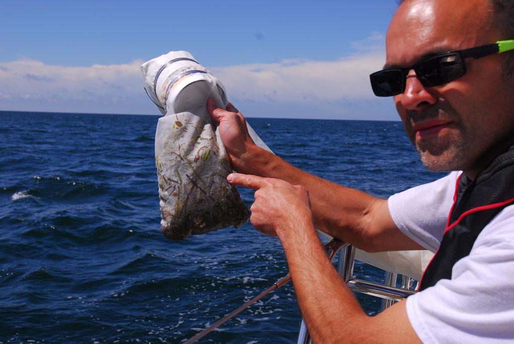 Martin Hassellöv tar upp ett prov för insamling av flytande mikroplast, insamlat utanför svenska sydkusten. Redan genom filterduken ser man både naturligt material som alger men också stora och små plastpartiklar.