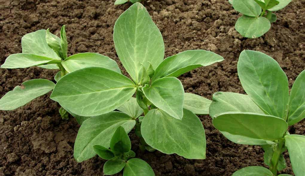 Mindre skillnad i skördarnas storlek mellan ekologisk och konventionell odling