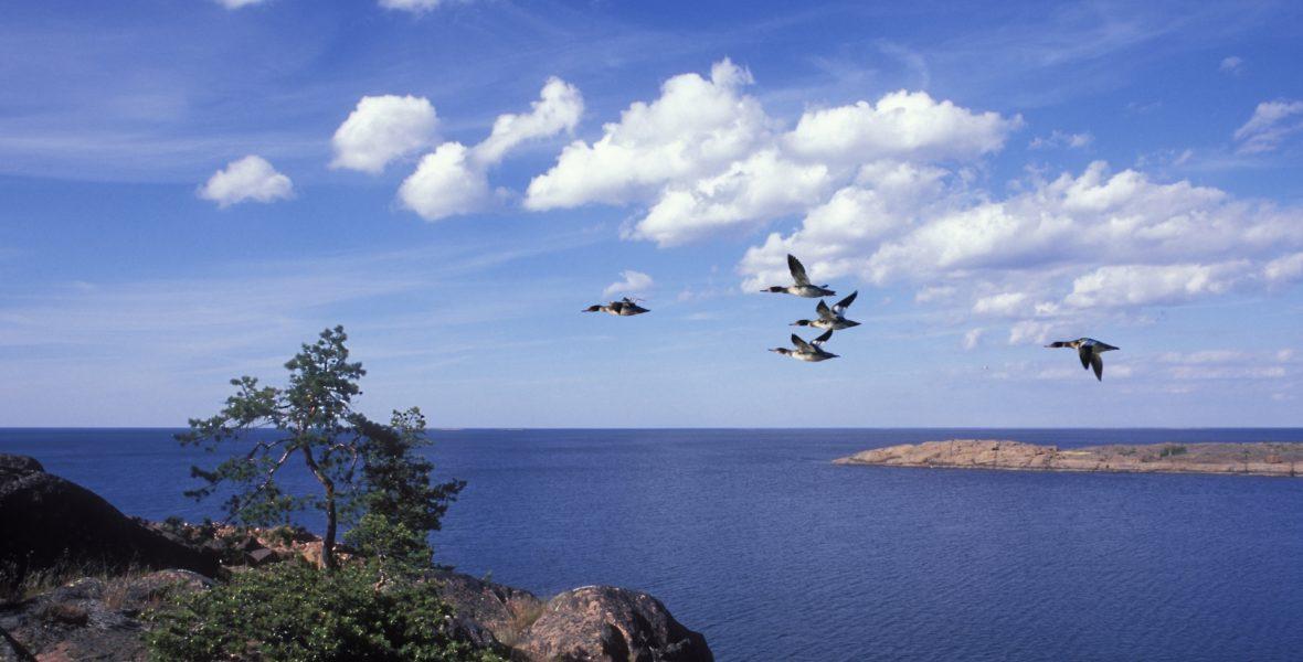Saltvatten väller in i Östersjön