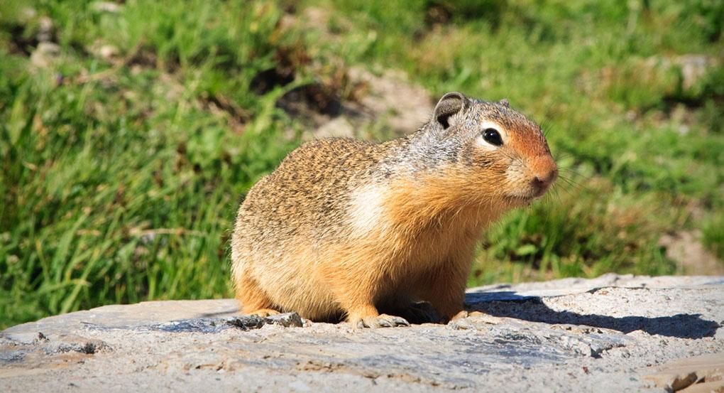 Hög ljudnivå påverkar nationalparkernas djurliv