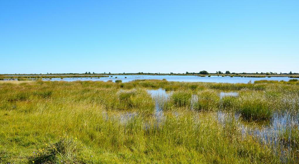 Sverige får två nya betydande våtmarker