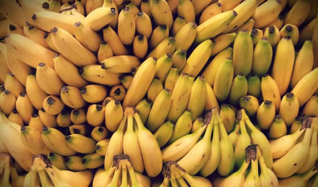 bara äta bananer