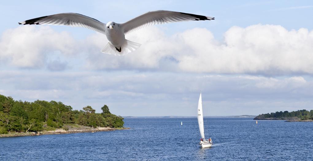 Östersjön mår bättre