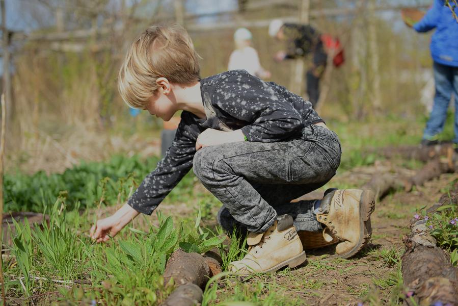 Foto: Holma Skogsträdgård