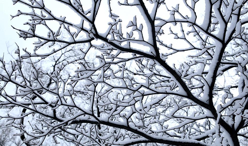 snö på en gren