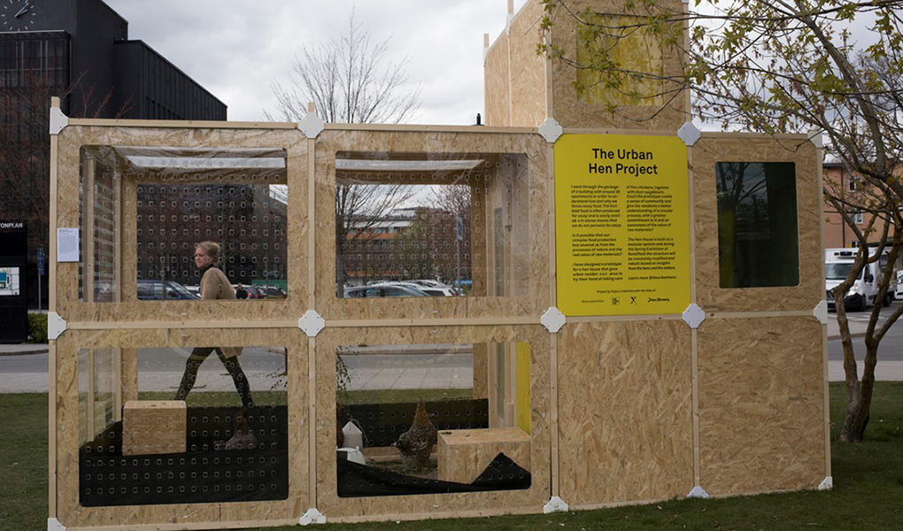 The urban hen project