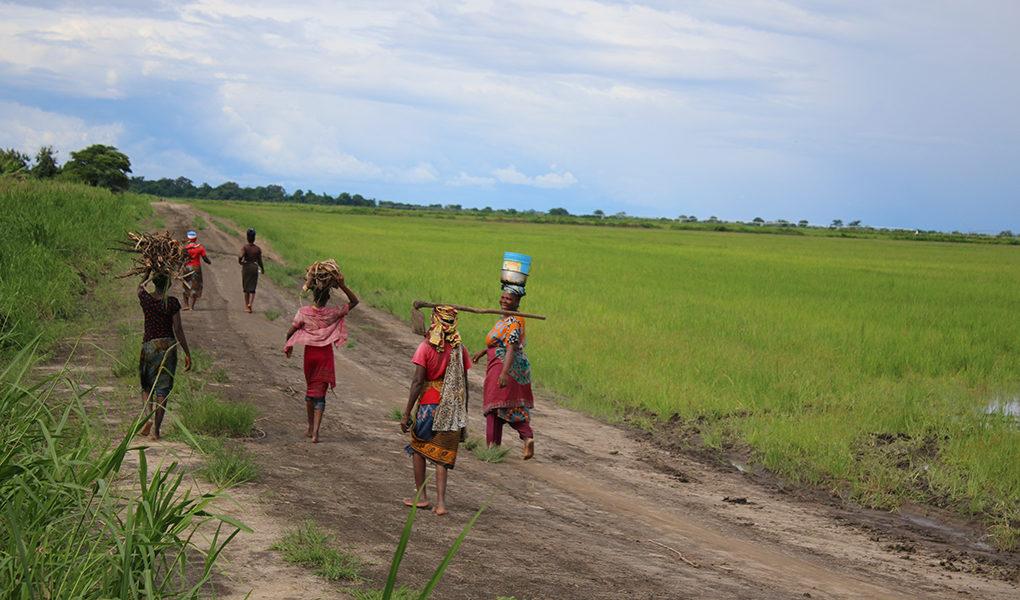 Bönder på väg till risfält