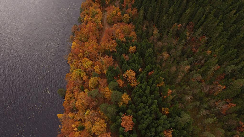 Ädellövskogen Halland
