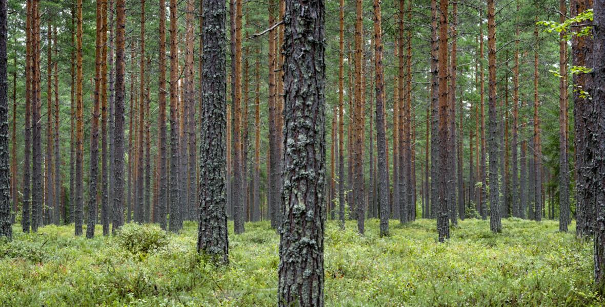 Skogsgödsling