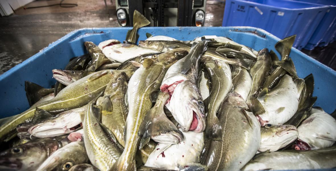 Hållbart fiske