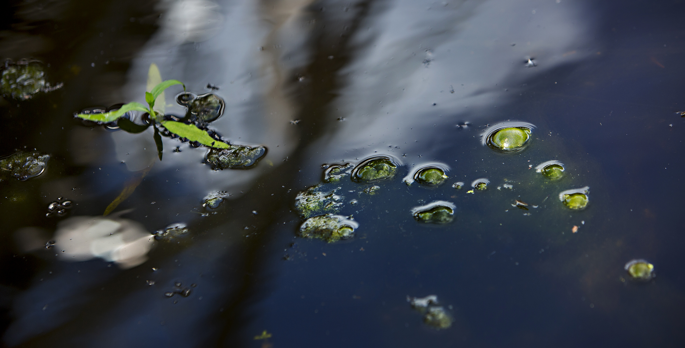 Dikade våtmarker