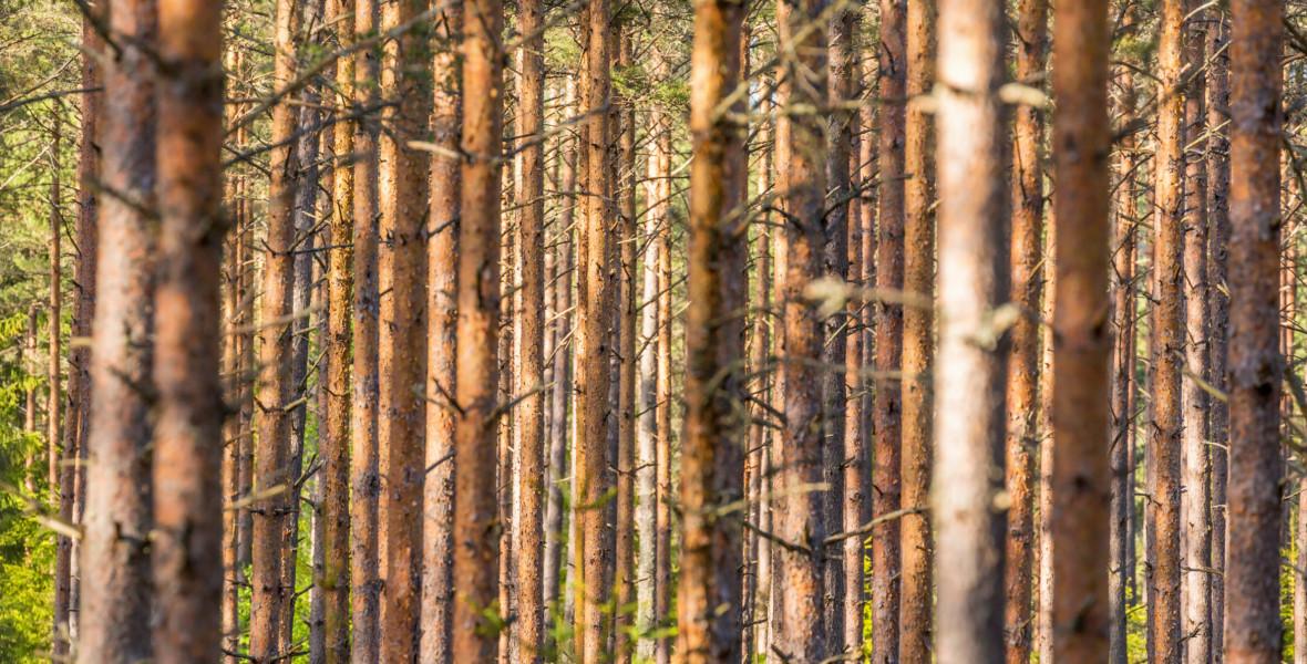Skogsnäringen