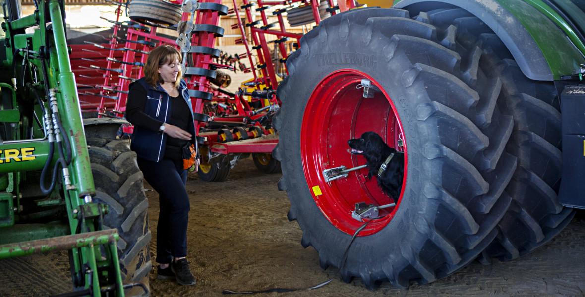 Hund söker i traktordäck