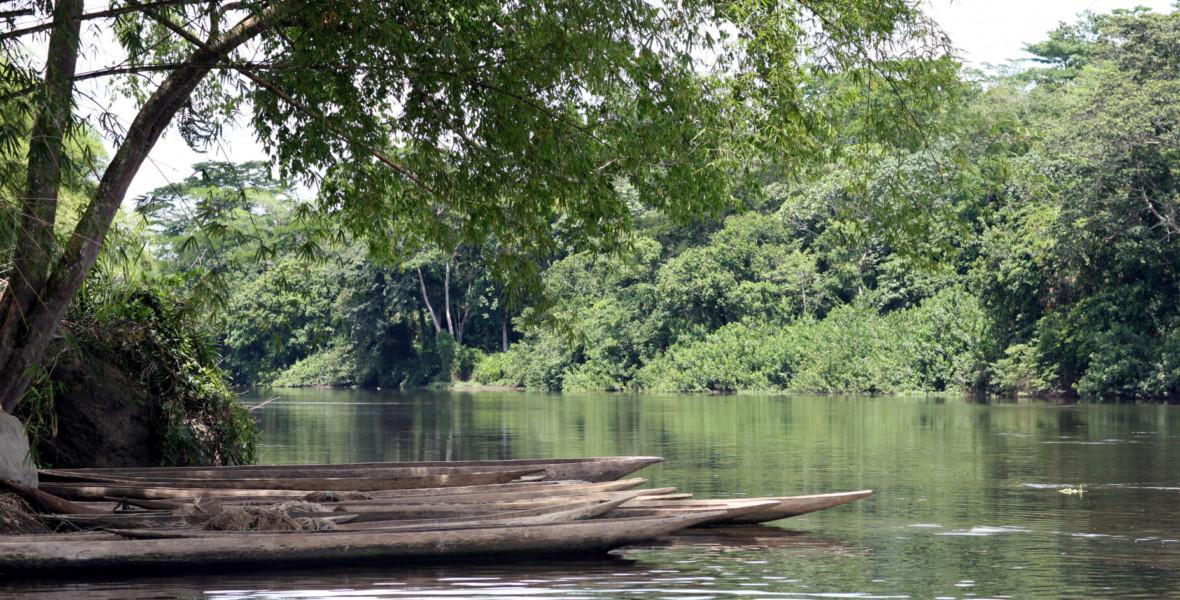 Skog i Kongo.